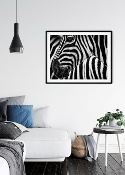 Closeup Zebra