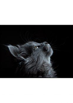 Grey Cat On Black