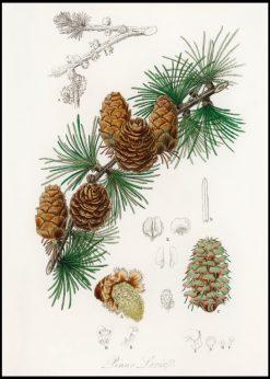 Old Pinetree Vintage