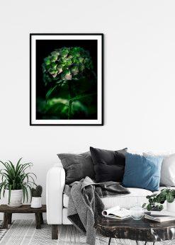 Magical Hydrangea