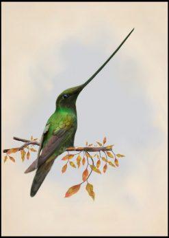 Vintage Colibri Illustration