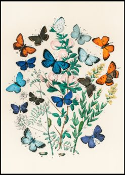 Collection of Butterflies Vintage