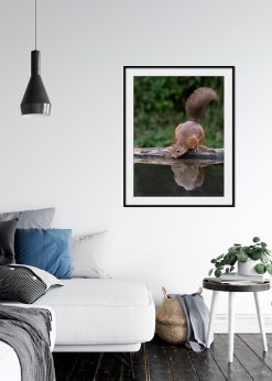 Squirrel Drinking Water
