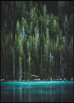Crystal Water And Green Trees