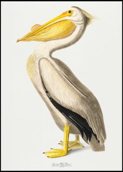 White Pelican Vintage