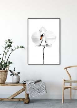 Swan Orchid by Sanna Wieslander