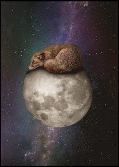 Sleeping Fox by Jenni Tervahauta