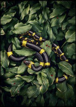 Snake by Jenni Tervahauta